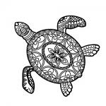 Free Download - Sea Turtle