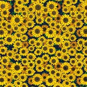 "Printed HTV Sunflowers 12"" x 15"" Sheet"